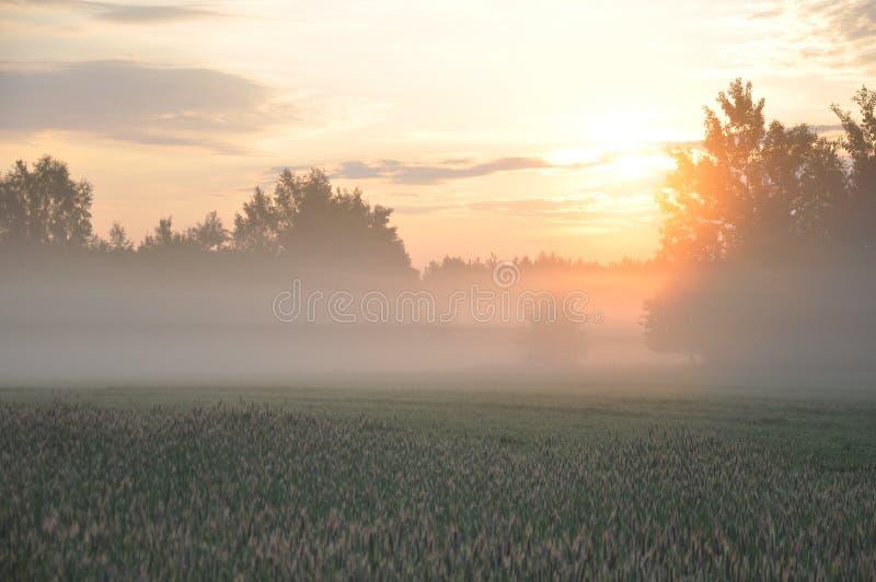Dawn στο λιβάδι Ζωηρόχρωμη ανατολή και ομίχλη επάνω από τον τομέα και τα δέντρα r στοκ εικόνες