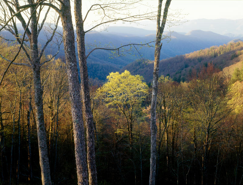 Dawn στο τσερόκι εθνικό δρυμός, μεγάλο καπνώές εθνικό πάρκο βουνών, βόρεια Καρολίνα στοκ εικόνες με δικαίωμα ελεύθερης χρήσης