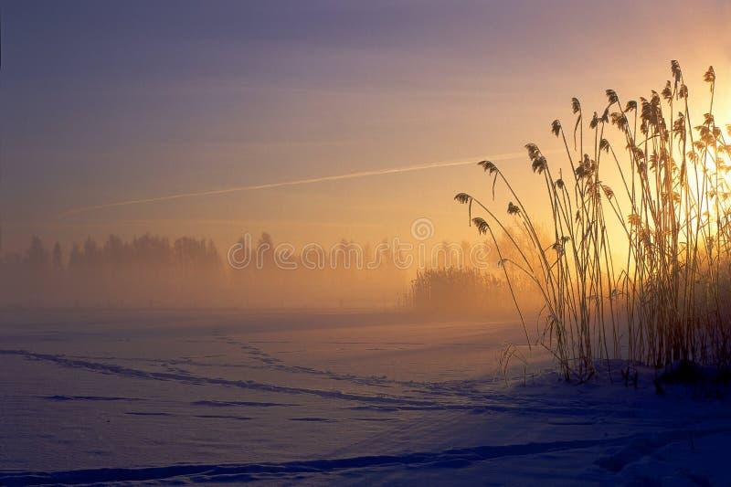 dawn zdjęcie royalty free