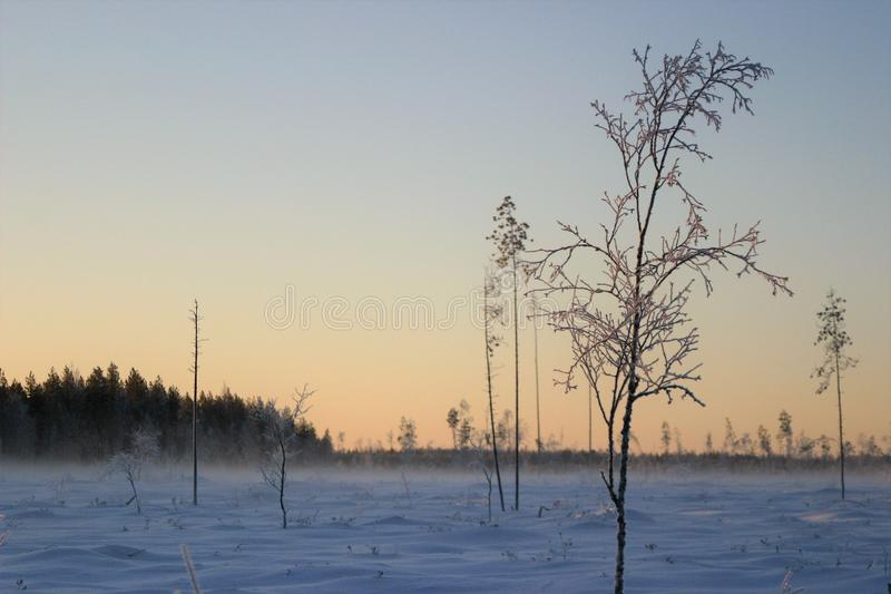 Dawn of beautiful cold winter day in the countryside. A beautiful landscae of a freezing cold field on a the countryside. It is dawn of a short northern winter royalty free stock photos