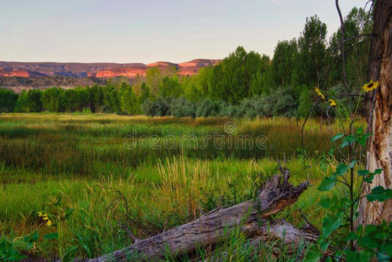 Dawn on Black Ridge from Late Summer Swamp foto de stock royalty free