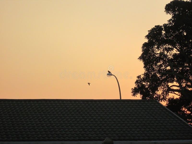 Dawn Breaking immagine stock libera da diritti