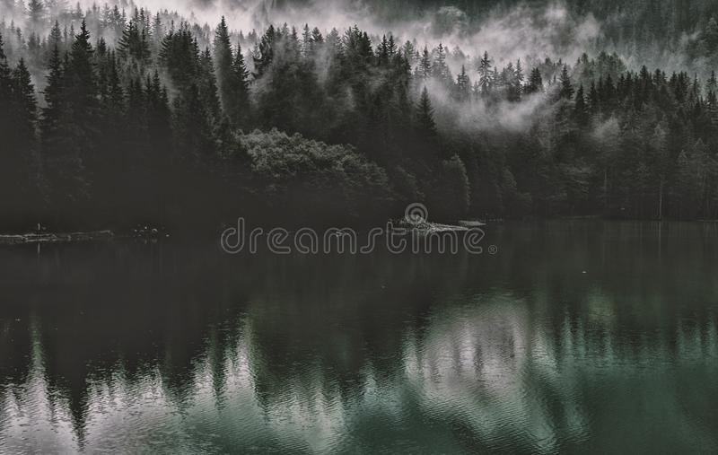 Dawn, Evening, Fog, Forest royalty free stock image
