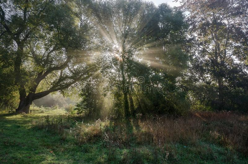Dawn in the Fall, Foggy Morning stock photo