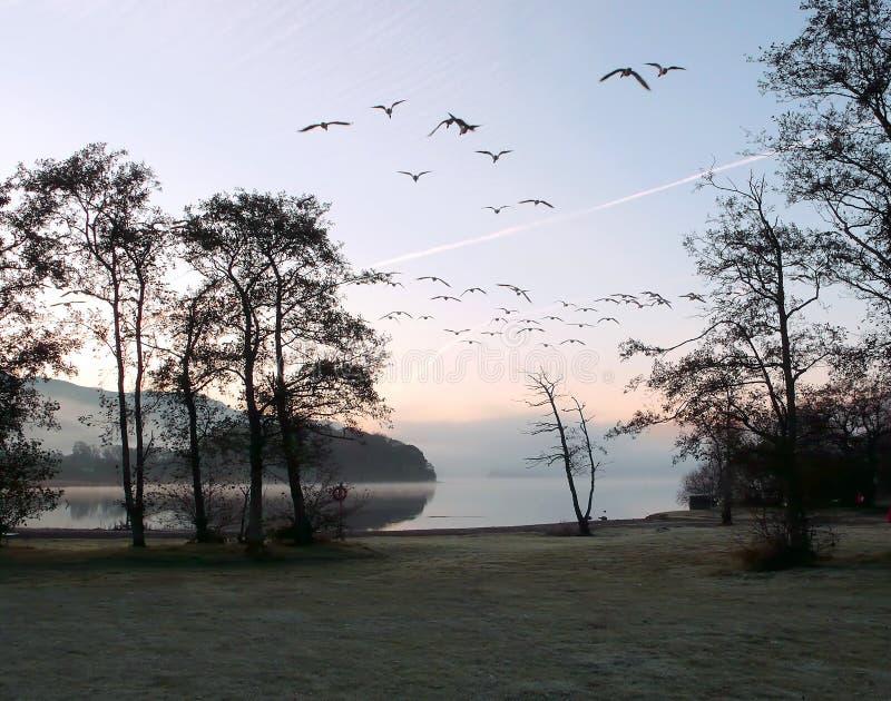 Dawn flight. royalty free stock photography