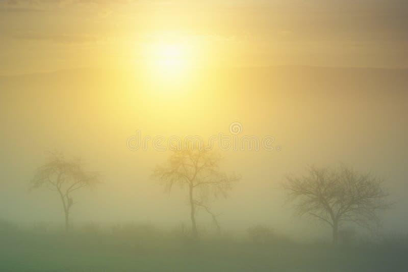 Dawn In Fog Royalty Free Stock Photo