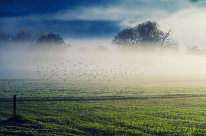 Dawn in the fog. Early in the morning royalty free stock image