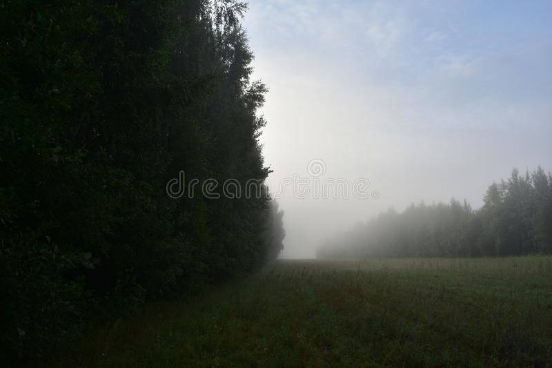 Dawn fog in a field near deciduous forests, in the blue sky white royalty free stock photography