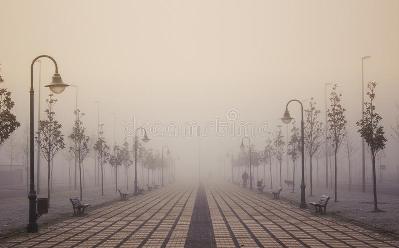 Dawn in the fog stock photography