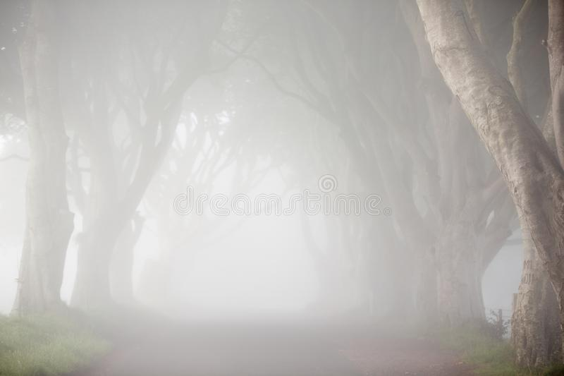 Dawn fog, among trees of Dark Hedges, North Ireland royalty free stock photography