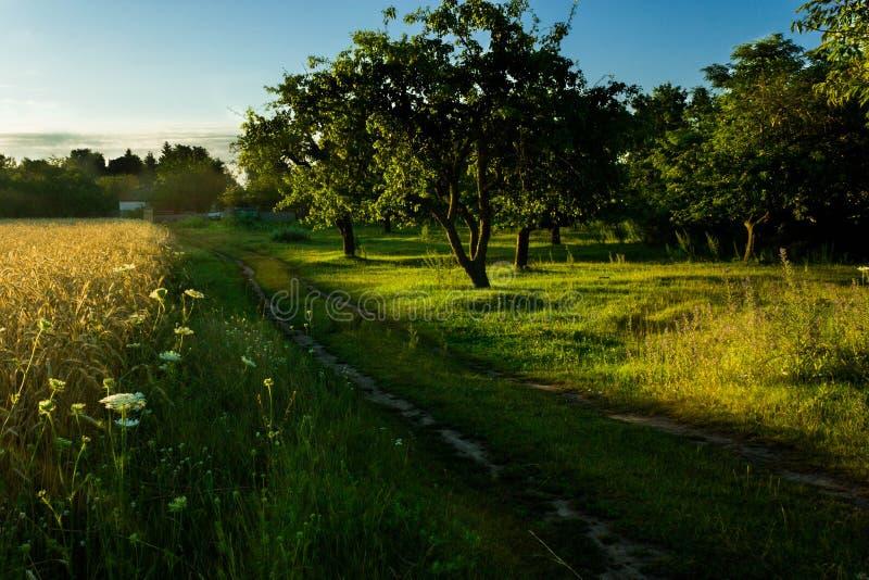 Dawn in het gebied en de tuin stock afbeeldingen