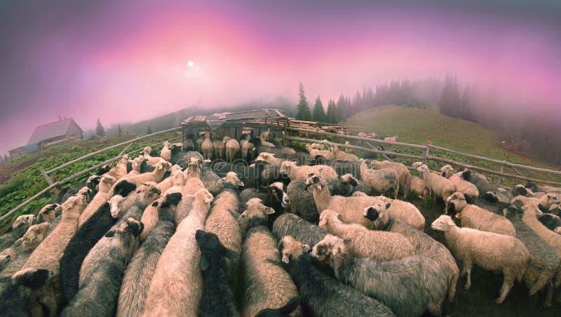 Dawn in het hoeden van Alpen stock foto