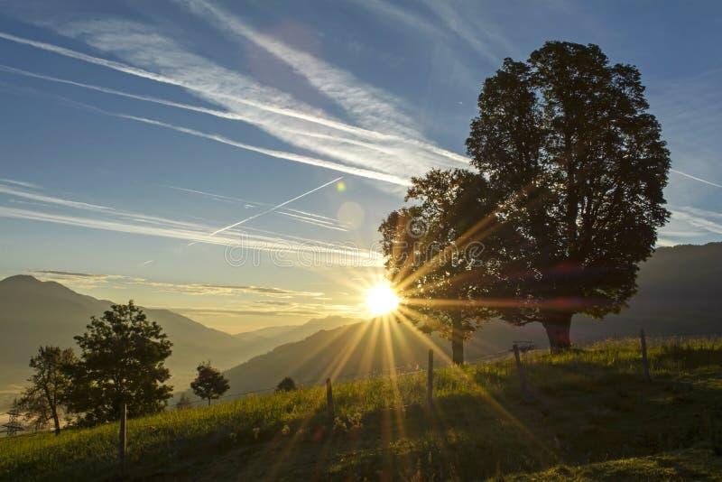 Dawn in het weiland royalty-vrije stock fotografie