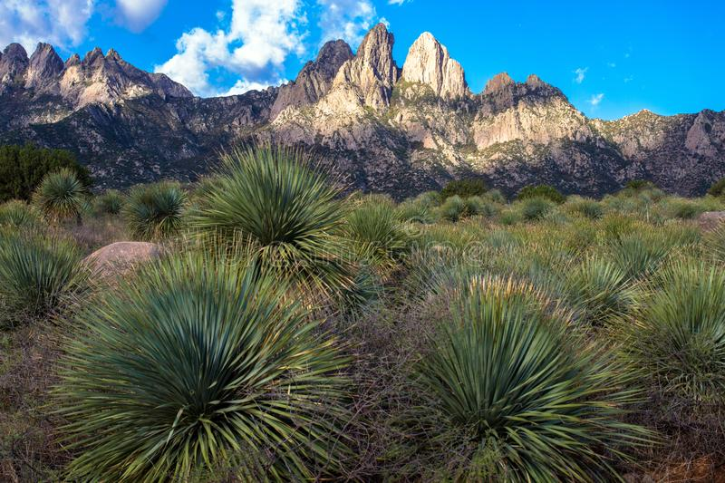 Dawn light at Organ Mountains-Desert Peaks National Monument in New Mexico. Dawn light at Organ Mountains-Desert Peaks National Monument near Las Cruces in stock image