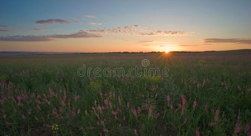 Dawn with lupine stock photography