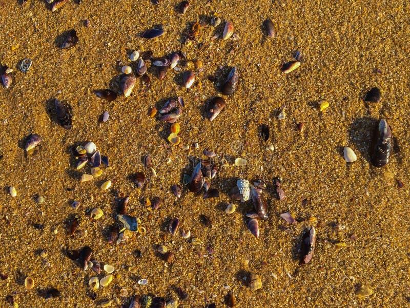 Dawn, Macae - Random seashells on Sand. Dawn sunlight on sand, Cavaleiros Beach, Macae, RJ royalty free stock images
