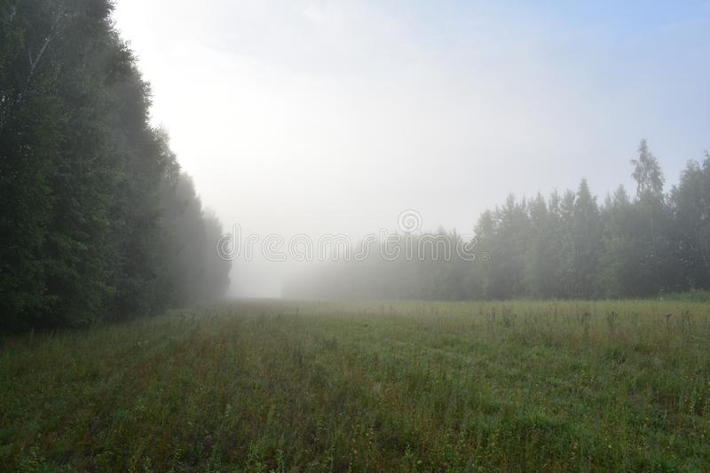 Dawn morning fog in the field near the deciduous forest, in the blue sky white stock photos