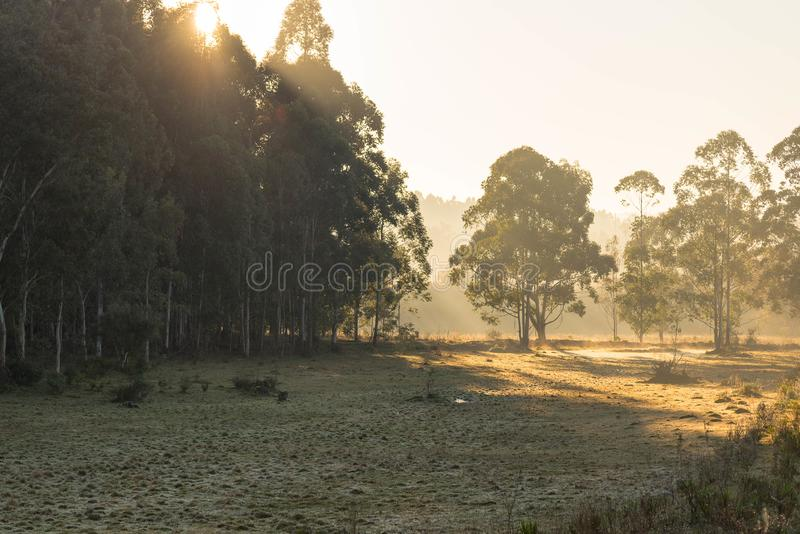 Winter Dawn with Frost formation 02 stock images