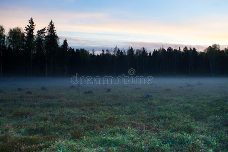 Dawn op het bos felling stock afbeeldingen