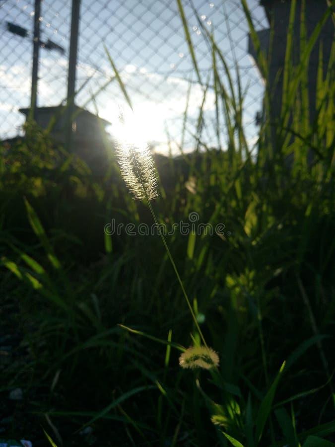 Dawn op het zonsopganggrondgebied stock fotografie