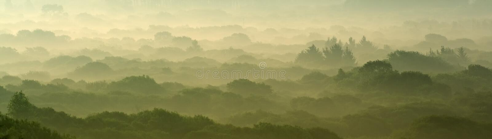 Dawn over the forest stock photography