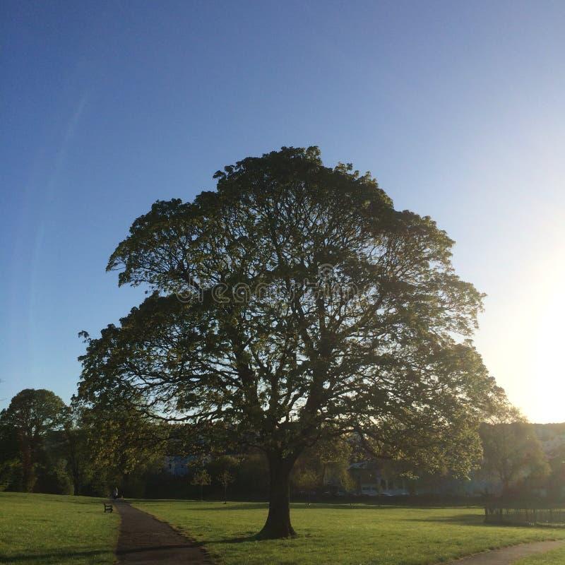 Dawn Park Pathway By Oak träd royaltyfri bild
