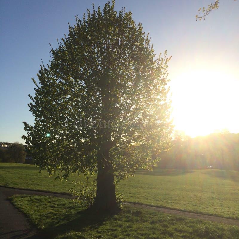 Dawn Park Pathway By Tree med solblom royaltyfri foto