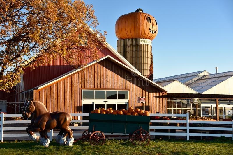 Dawn On The Pumpkin Farm imagem de stock