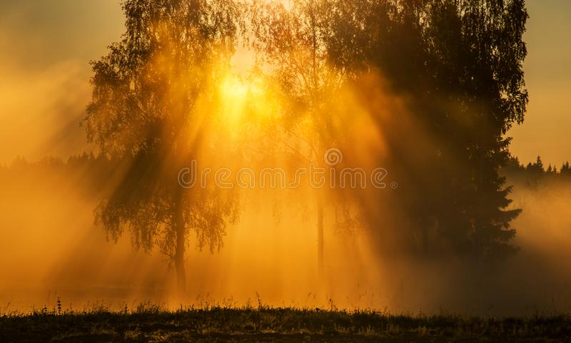 Dawn scenic landscape at sunrise. Dawn scenic landscape with mist and sun in a field near forest and birch trees glowing with sun light fog stock photography