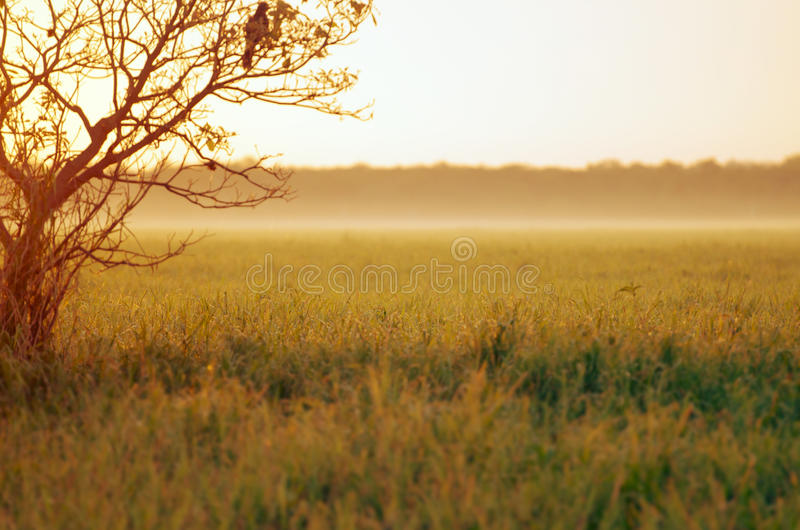 Download Dawn stock photo. Image of copy, dreamy, background, green - 33156528