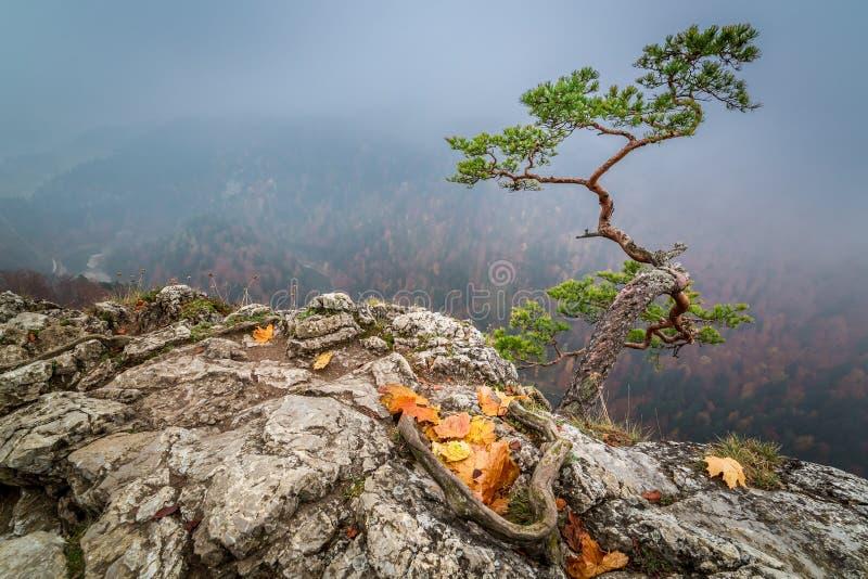 Dawn at Sokolica peak in Pieniny mountains in autumn, Poland. Europe stock images