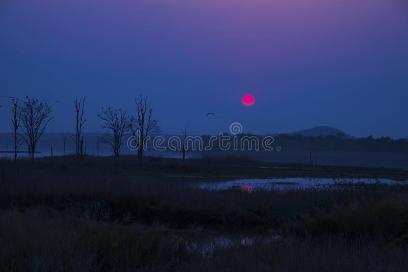 Dawn stock photos