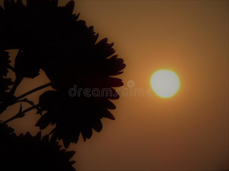 Dawn time royalty free stock image