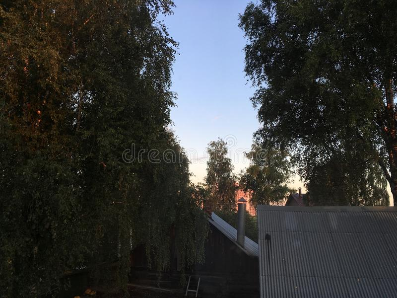 Dawn in the trees stock photography