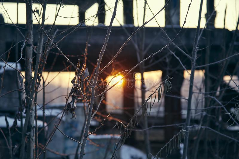 The dawning sun through the branches. In the winter in an abandoned building royalty free stock photo