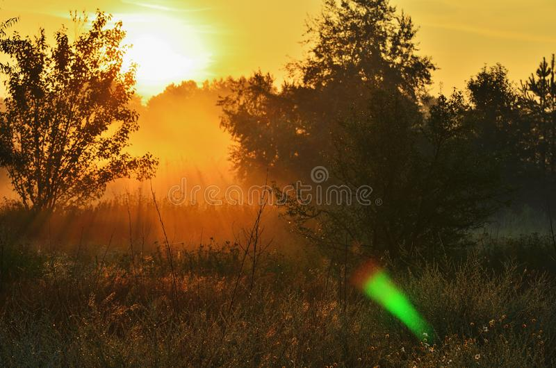 Dawning in the woods, the sun is pouring meadow. Bright sunlight, nobody stock images