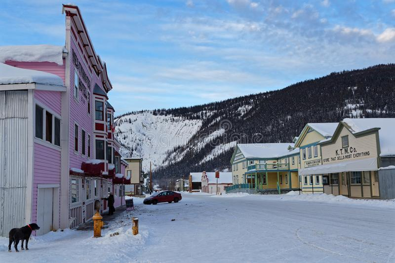 Dog in a street of Dawson City. DAWSON CITY, YUKON, CANADA, March 10, 2019 : A street of the city, linked to the Klondike Gold Rush and featured prominently in royalty free stock photo