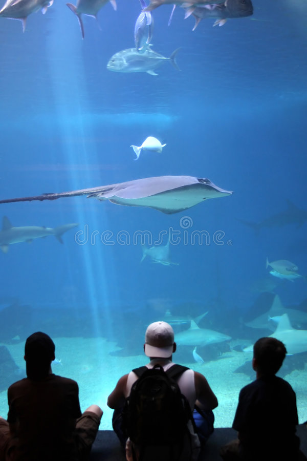 A Day at the Aquarium. Three teens in awe of the marine life at the Aquarium stock photography