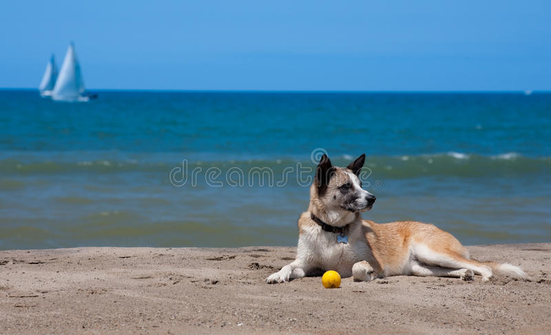 Download Day at the beach stock photo. Image of concept, ventura - 9759310
