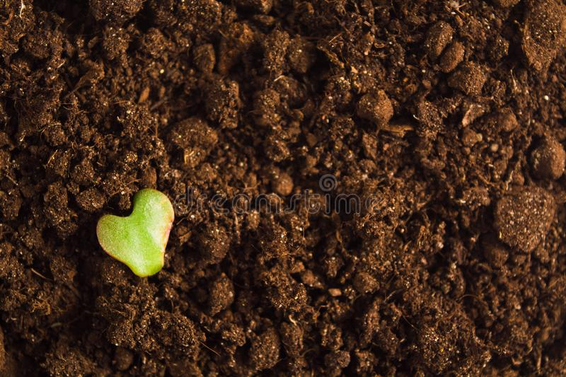 Day of Earth concept, green leaf with heart shape over natural brown ground with copy space royalty free stock photography