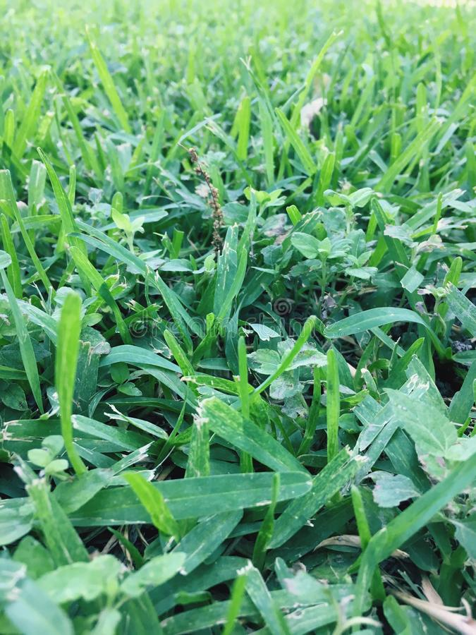 Day green Nature life gross royalty free stock photography