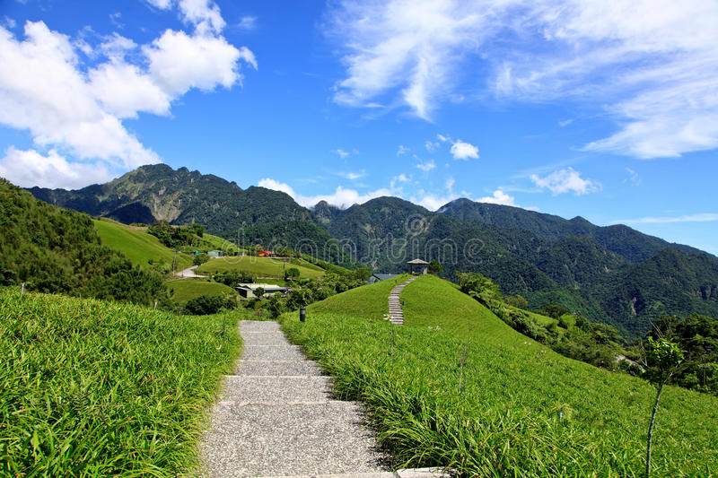 Day lily flowers field,Taiwan royalty free stock photography