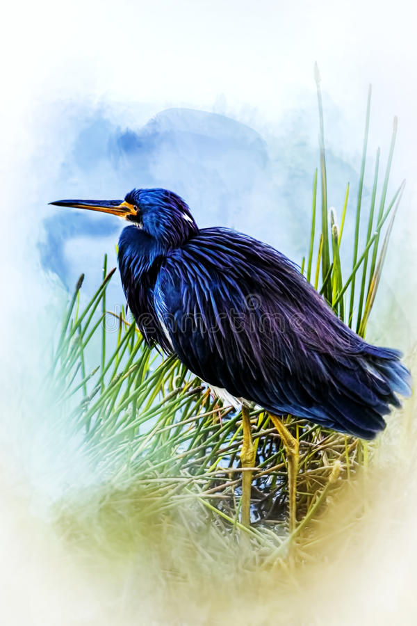 A Day In The Marsh royalty free stock image