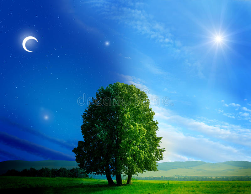 Day and night tree royalty free stock image