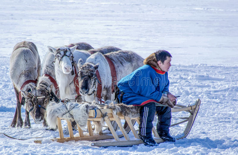 Day of the reindeer herder on the Yamal Peninsula. royalty free stock photos