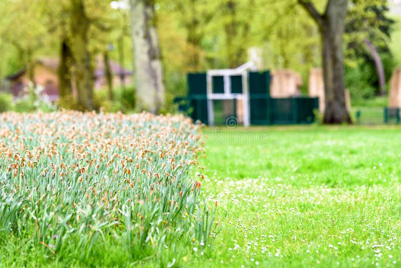 Day view field with withered daffodils on half of it.  stock image