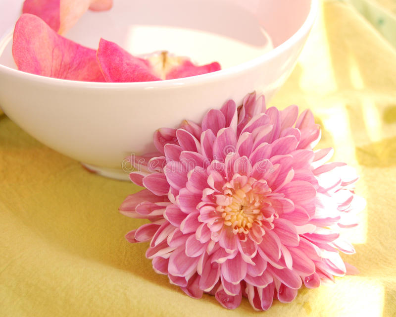 Download Daybreak stock photo. Image of floral, happy, nature - 13281380