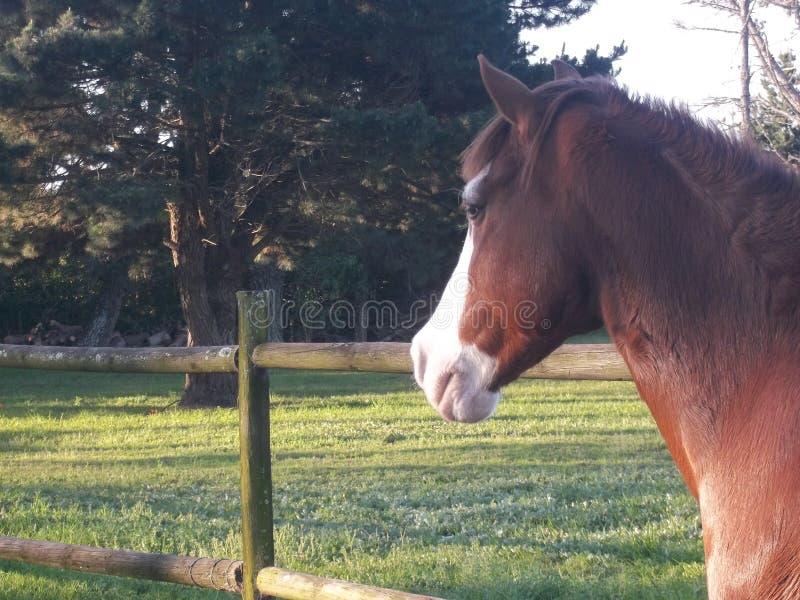 Daydreaming лошадь стоковое изображение rf