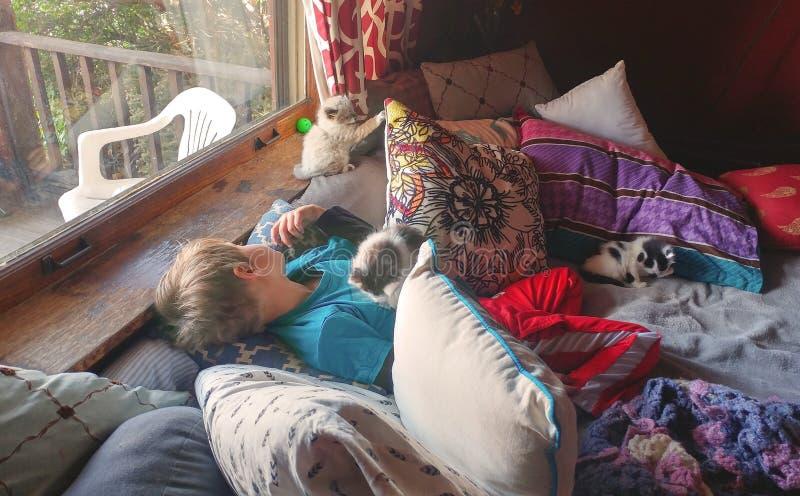 Daydreaming с котятами стоковая фотография rf