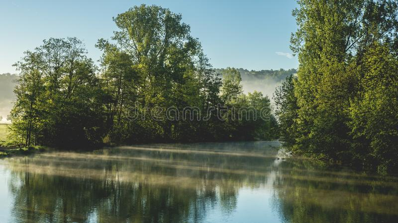 Daylight, Foggy, Forest royalty free stock photography